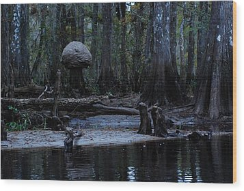 Fisheating Creek 26 Wood Print by Carol Kay
