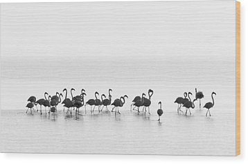 Flamingos Wood Print by Joan Gil Raga