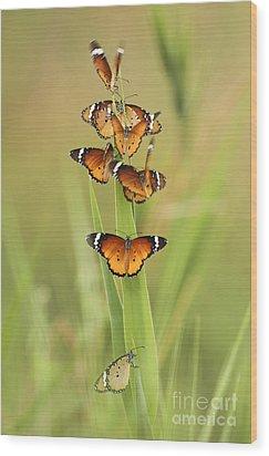 Flock Of Plain Tiger Danaus Chrysippus Wood Print by Alon Meir