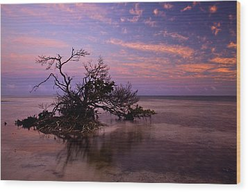 Florida Mangrove Sunset Wood Print by Mike  Dawson