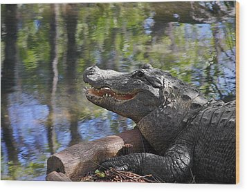 Florida - Where The Alligator Smiles Wood Print by Christine Till