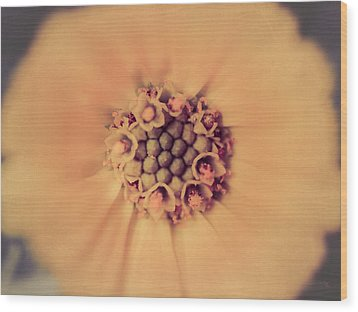 Flower Beauty IIi Wood Print by Marco Oliveira