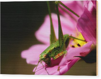 Flower Hopper Wood Print by Michael Eingle