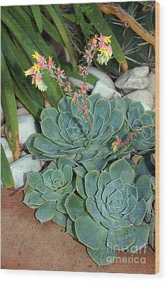 Flowering Cactus Wood Print by Rod Jones