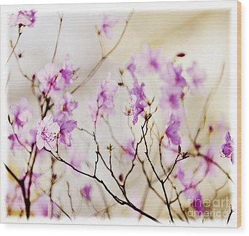 Flowering Rhododendron Wood Print by Elena Elisseeva