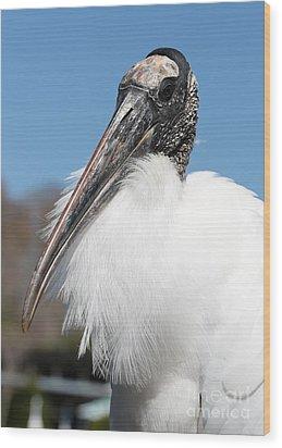Fluffy Wood Stork Wood Print by Carol Groenen