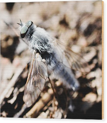 Fly Wood Print by Toppart Sweden