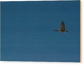 Flying Goose Wood Print by Matt Radcliffe