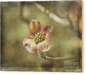 Focus On Dogwood Wood Print by Terry Rowe