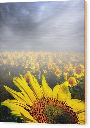 Foggy Field Of Sunflowers Wood Print by Bob Orsillo