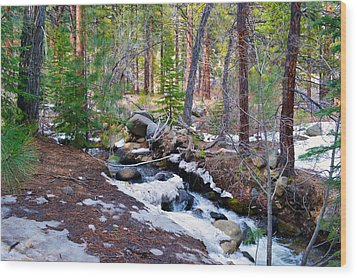 Forest Creek 4 Wood Print by Brent Dolliver