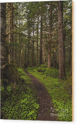 Forest Serenity Path Wood Print by Mike Reid