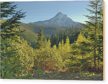 Forest View Wood Print by Arthur Fix