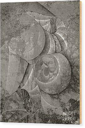 Fossilized Shell - B And W Wood Print by Klara Acel