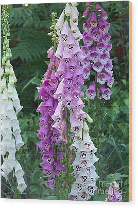 Foxglove After The Rains Wood Print by Eunice Miller