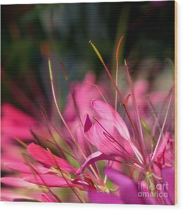 Free Spirit Cleome Wood Print by France Laliberte