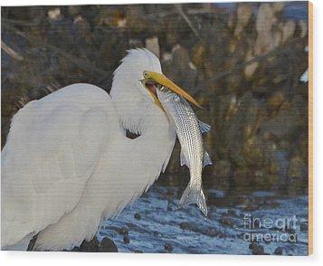 Fresh Catch Wood Print by Kathy Baccari