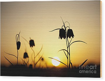 Fritillary Flower Sunset Wood Print by Tim Gainey