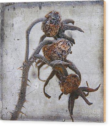 Frozen Wood Print by Bernard Jaubert