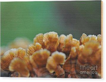 Fungus Growing On Log Wood Print by Dan Friend