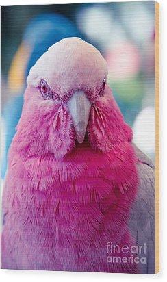 Galah - Eolophus Roseicapilla - Pink And Grey - Roseate Cockatoo Maui Hawaii Wood Print by Sharon Mau