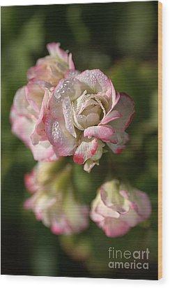 Geranium Flowers Wood Print by Joy Watson