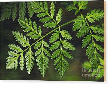 Gereric Vegetation Wood Print by Carlos Caetano