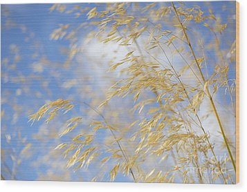 Giant Feather Grass Wood Print by Tim Gainey