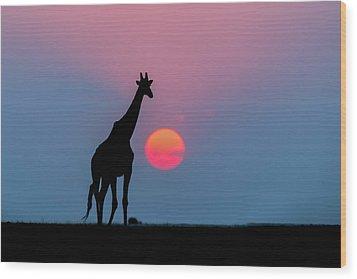 Giraffe At Sunset Chobe Np Botswana Wood Print by Andrew Schoeman