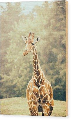 Giraffe In The Rain Wood Print by Pati Photography