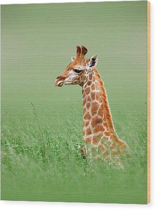 Giraffe Lying In Grass Wood Print by Johan Swanepoel