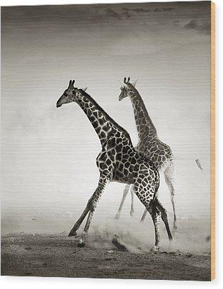Giraffes Fleeing Wood Print by Johan Swanepoel