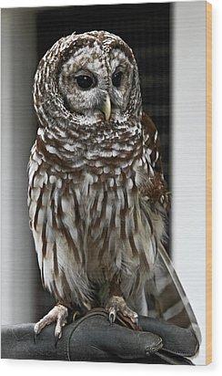 Give A Hoot Wood Print by John Haldane