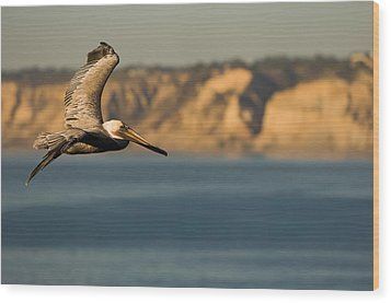 Gliding Pelican Wood Print by Sebastian Musial