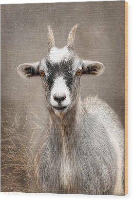 Goat Portrait Wood Print by Lori Deiter