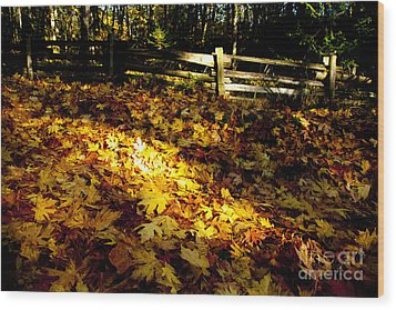 Golden Autumn Leaves Wood Print by Graham Foulkes