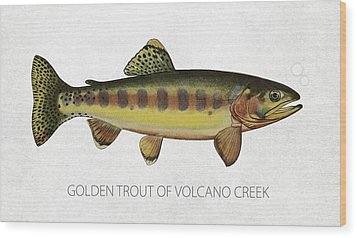 Golden Trout Of Volcano Creek Wood Print by Aged Pixel