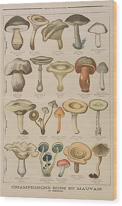 Good And Bad Mushrooms Wood Print by French School