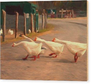 Goose Crossing Wood Print by Michael Pickett