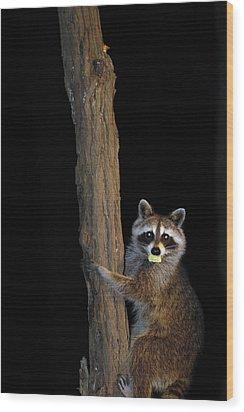 Gotcha The Cornbread Bandit Wood Print by Randall Branham