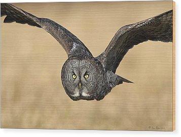 Great Gray Owl In Flight Wood Print by Daniel Behm