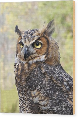 Great Horned Owl Wood Print by Ann Horn