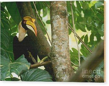 Great Pied Hornbill Wood Print by Art Wolfe