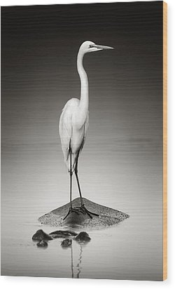 Great White Egret On Hippo Wood Print by Johan Swanepoel