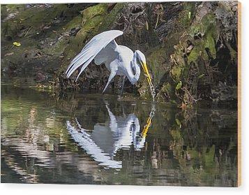 Great White Heron Fishing Wood Print by Charles Warren