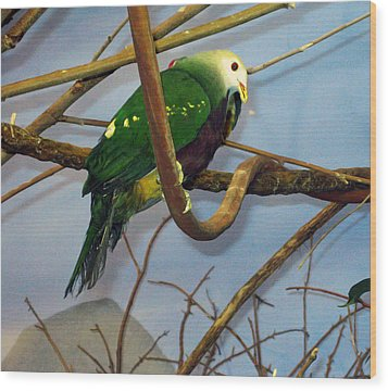 Green Bird Wood Print by Larry Stolle