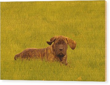 Green Grass And Floppy Ears Wood Print by Jeff Swan