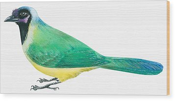 Green Jay Wood Print by Anonymous