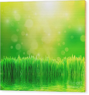 Green Nature Background With Fresh Grass Wood Print by Michal Bednarek