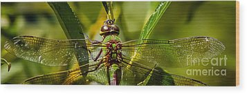 Green On Green Wood Print by Mitch Shindelbower